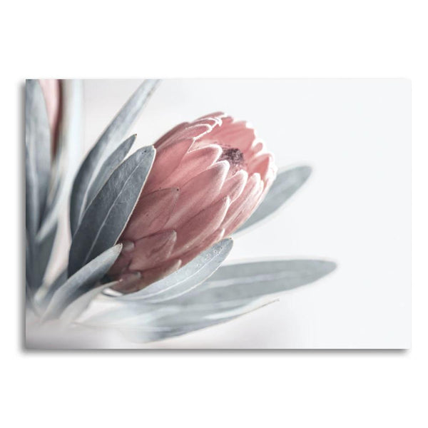 Wall-Art-Poster-Canvas-Framed-Protea Flower-Gioia Wall Art