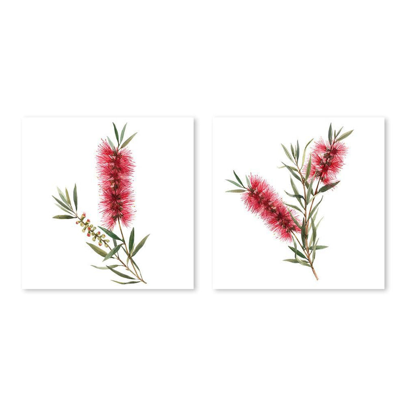 Wall-Art-Poster-Canvas-Framed-Red Bottlebrush, Set Of 2, Australian Native flower-Gioia Wall Art