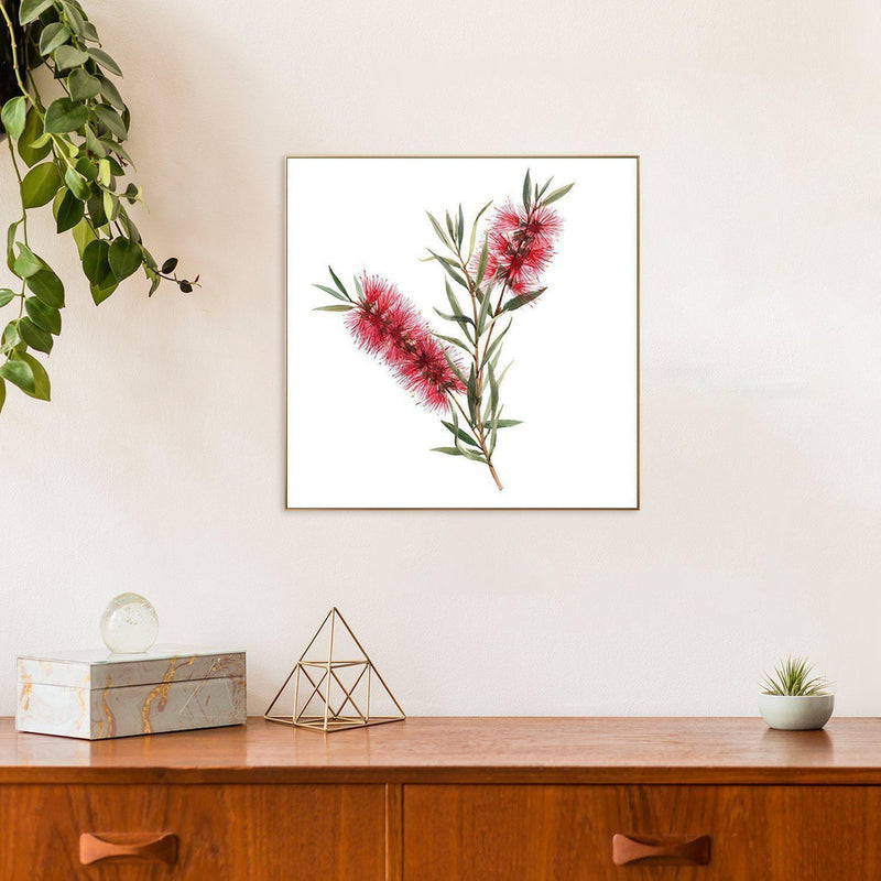 Wall-Art-Poster-Canvas-Framed-Red Bottlebrush, Style B, Australian Native Flowers-Gioia Wall Art