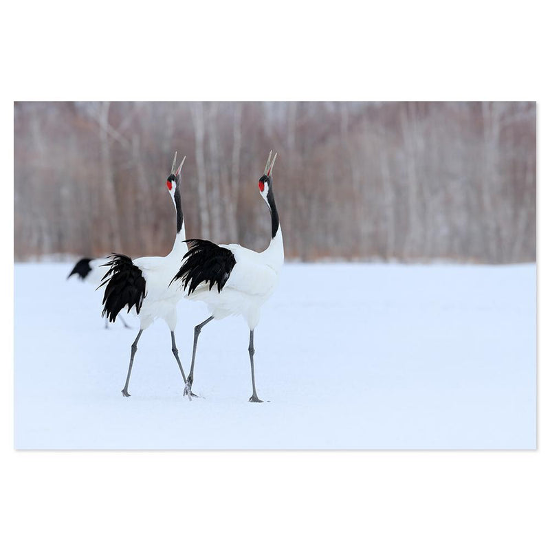 Wall-Art-Poster-Canvas-Framed-Singing Cranes-Gioia Wall Art