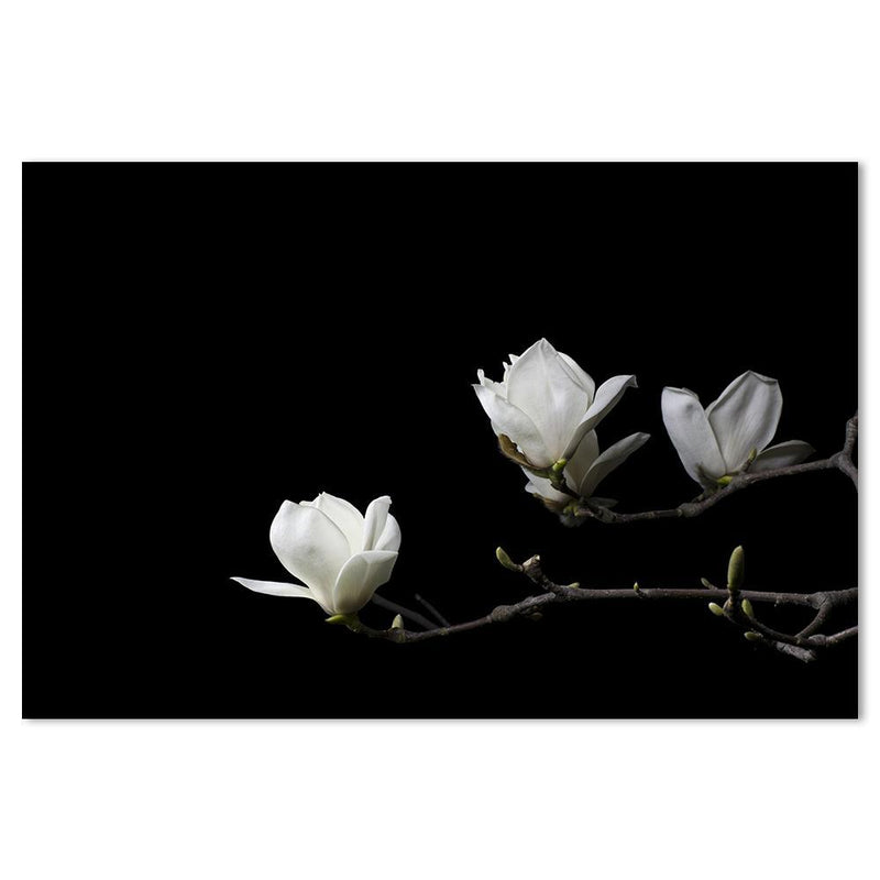 Wall-Art-Poster-Canvas-Framed-White magnolia flower, Style B-Gioia Wall Art
