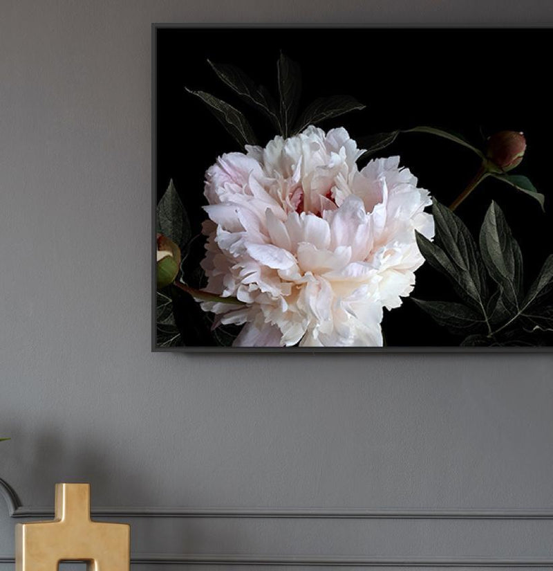 Wall-Art-Poster-Canvas-Framed-White peony on black background-Gioia Wall Art