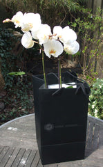 orchidee in draagtas