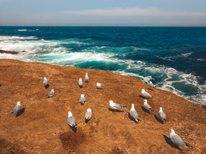 Seagulls and the ocean - Free Stock Image