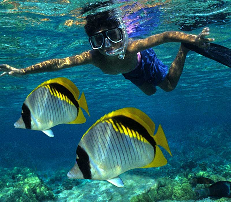 Half Day Private Charter Snorkeling and Diving - Reefinity Adventures