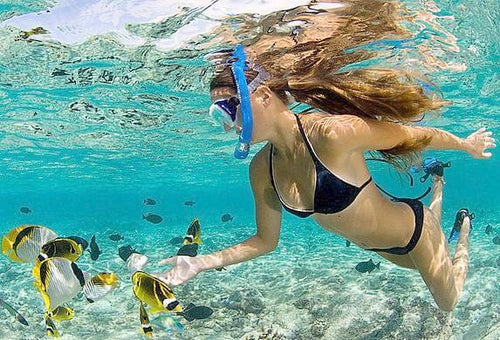 Private Charter Snorkeling and Diving - Reefinity Adventures