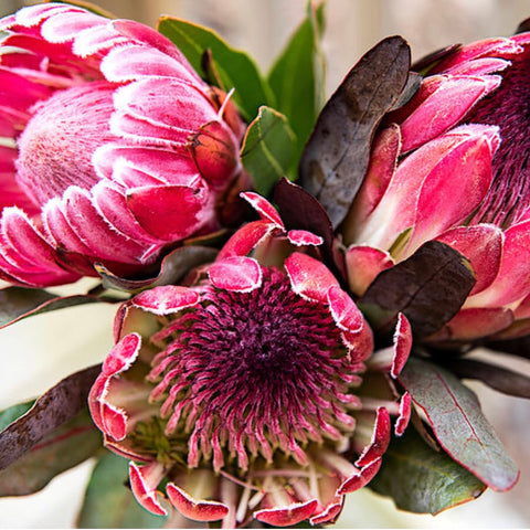 Pink Picasso Color by Number Pretty Protea