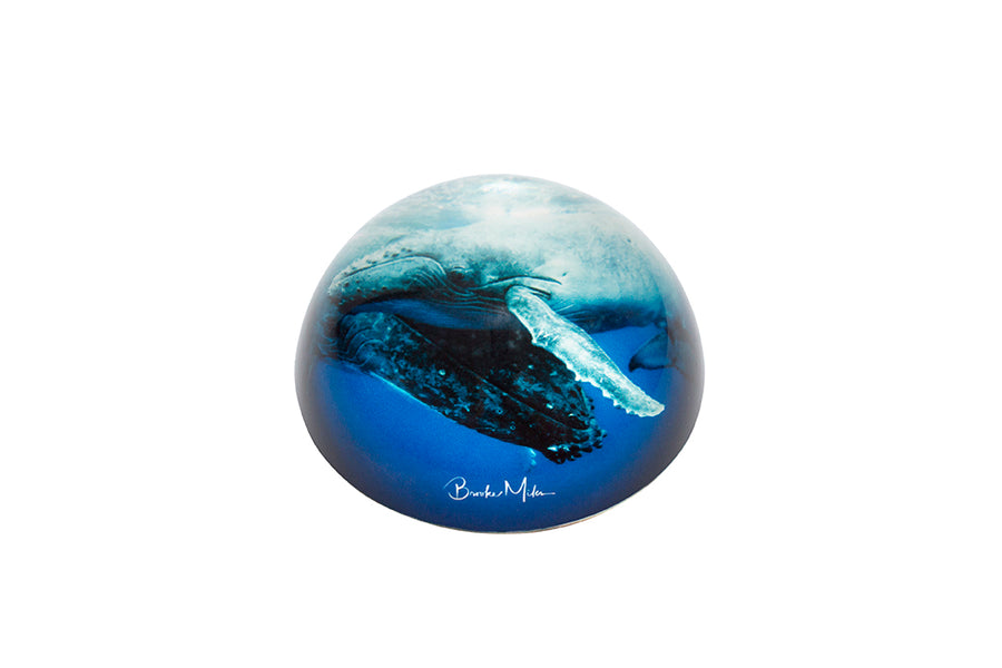 Glass Dome - 'A Mothers Touch' Humpback Whale Image