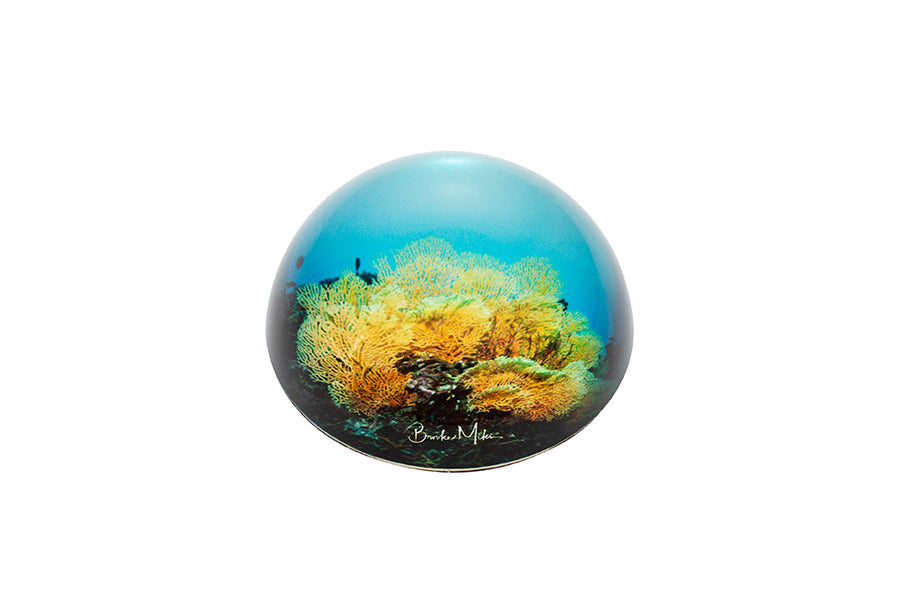 Glass Dome Fan Coral