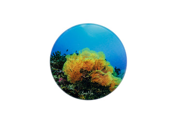 Round Glass Photo Coaster Fan Coral Wholesale