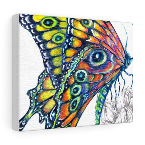 Vibrant Butterfly - Canvas Gallery Wraps