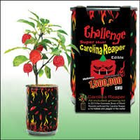 Carolina Reaper Growing Kit