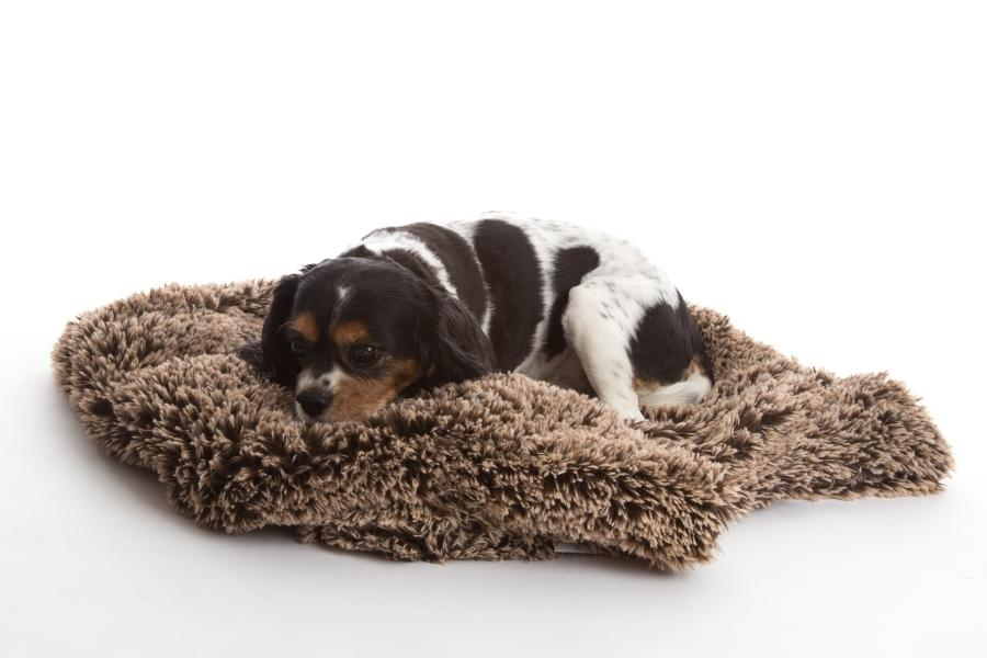 Shaggy Brown Frost Dog Blanket