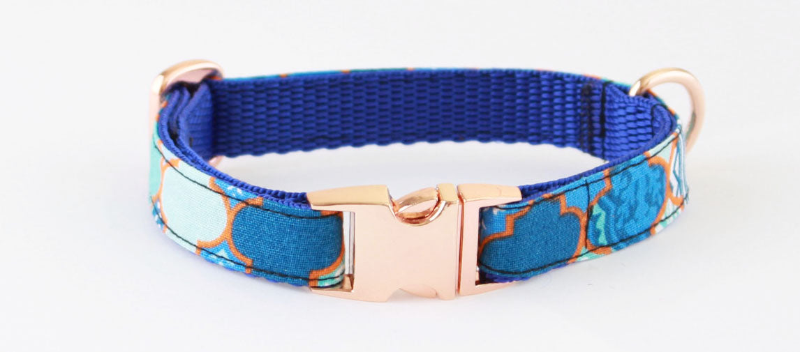Aladdin Blue Gold Slim Fit 15mm Dog Collar - Pet Pooch Boutique - My Pet Gift Box