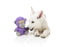 Fuzzyard Magic The Monkey Small Dog Toy - FuzzYard - My Pet Gift Box