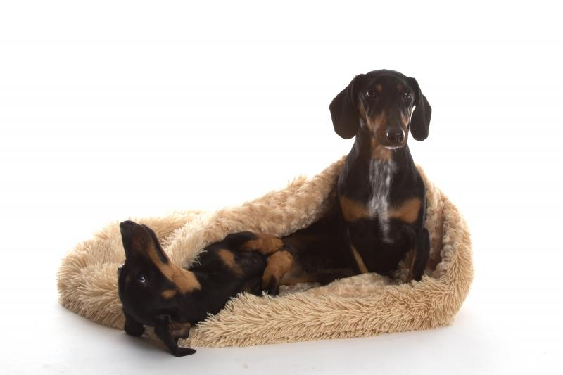 In Vogue Pets Shaggy Pooch Pod Dog Bed - Camel - In Vogue Pets - My Pet Gift Box