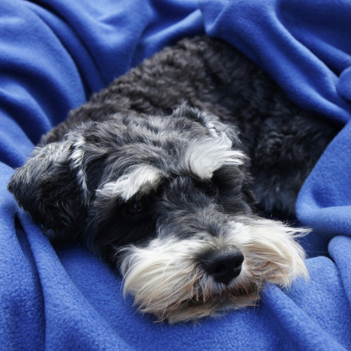 Dog Snuggle Blanket Aqua - In Vogue Pets - My Pet Gift Box