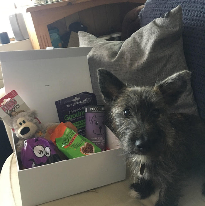 Personalised 3 Monthly Subscription Box For Dogs