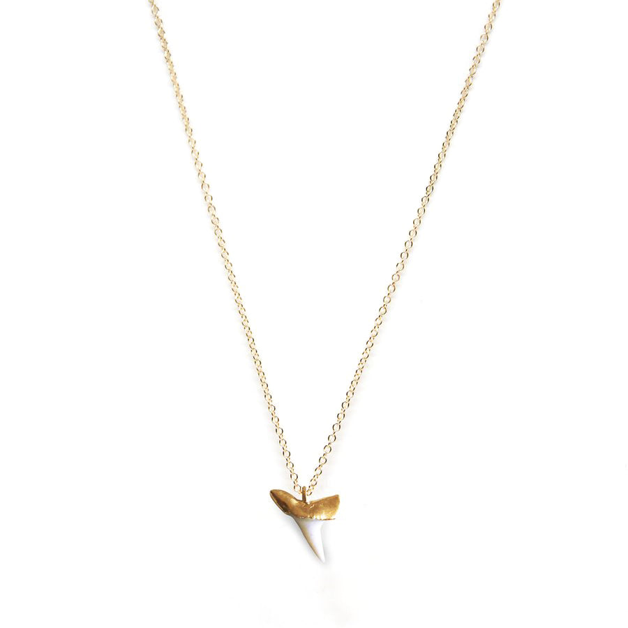 Shark Tooth White