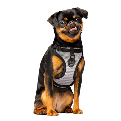 Canada Pooch Everything Harness Water-Resistant Reflective