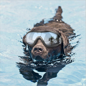 Adjustable Dog Goggles Anti UV Sport Eyewear