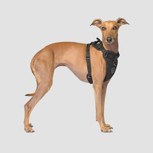 Canada Pooch Everything Harness Mesh Black
