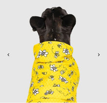 Bee rain coats for dogs
