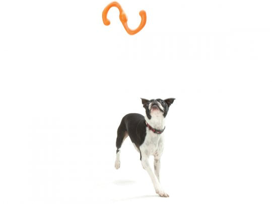 West Paw Bumi with Zogoflex - Tug & Fetch Play
