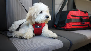 Clickit Sport - Travel Safety Harness