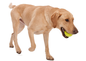 Jive Dog Ball - for Tough Chewers