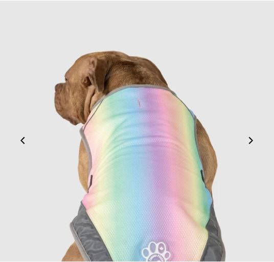 rainbow vest for dogs