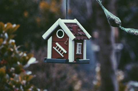 backyard bird house
