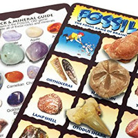 FOSSIL ON! Game with Fossil, Rock & Mineral Collection