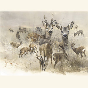 "Author's signed print ""European Roe Deer"""