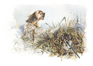 "Author's print ""English setter. On woodcock"""