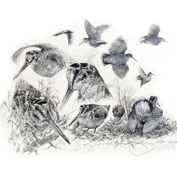 "Author's print ""Woodcocks"""