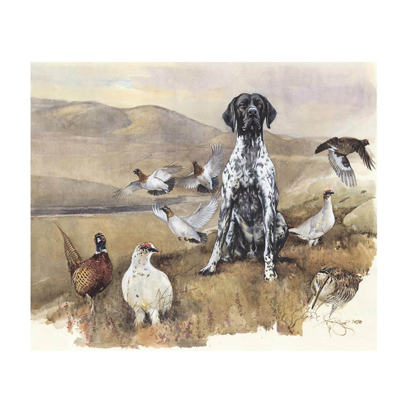 "Author's print ""Bird dog. GSP"""