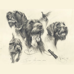 "Author's print ""German Wirehaired Pointer. Hunting."""