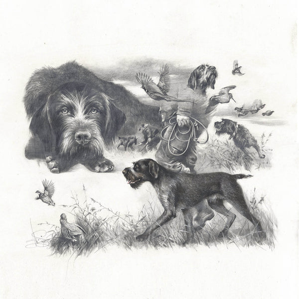 "Author's print ""German Wirehaired Pointer. Memories..."""