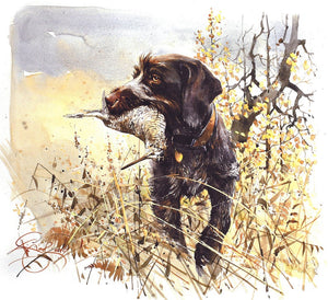 "Author's print ""German Wirehaired Pointer. Woodcock hunting"""