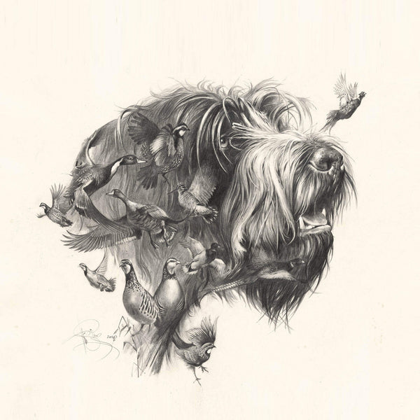 "Author's print ""Oh, my dreams..."" Wirehaired Pointing Griffon"