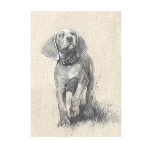"Author's print ""Weimaraner Puppy"""