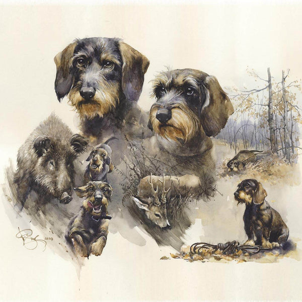 "Author's print ""Wirehaired Dachshund. Blood trail hunting"""