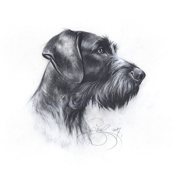 "Author's print ""German Wirehaired Pointer"""