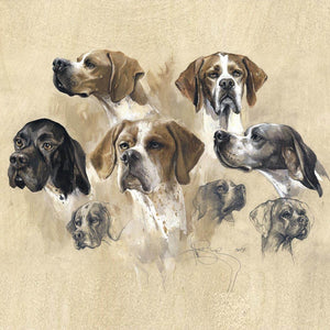 "Author's print ""Pointer. Breed Variety"""