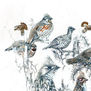 "Author's print ""Ruffed Grouse"""