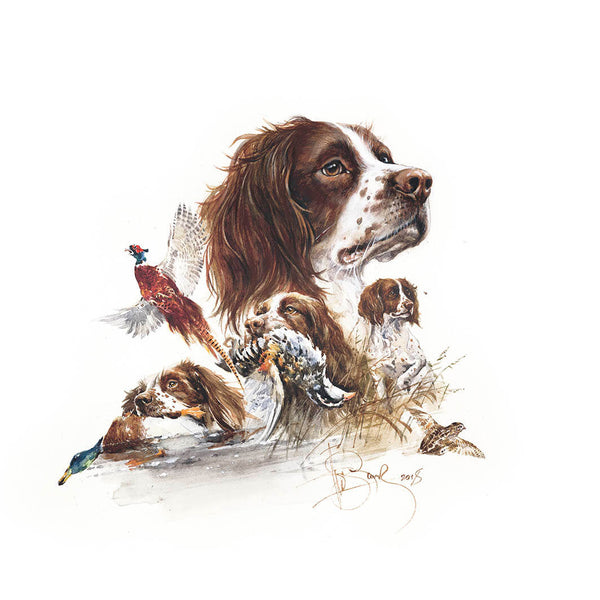 "Author's print ""English Springer Spaniel"""