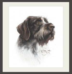 "Author's print ""German Wirehaired Pointer. Portrait"""