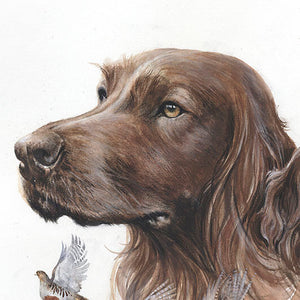 "Author's print ""Irish setter"""