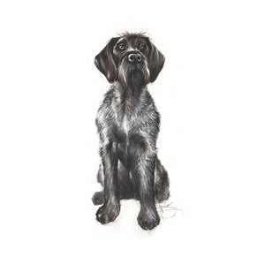 "Author's print ""Puppy Drahthaar"""